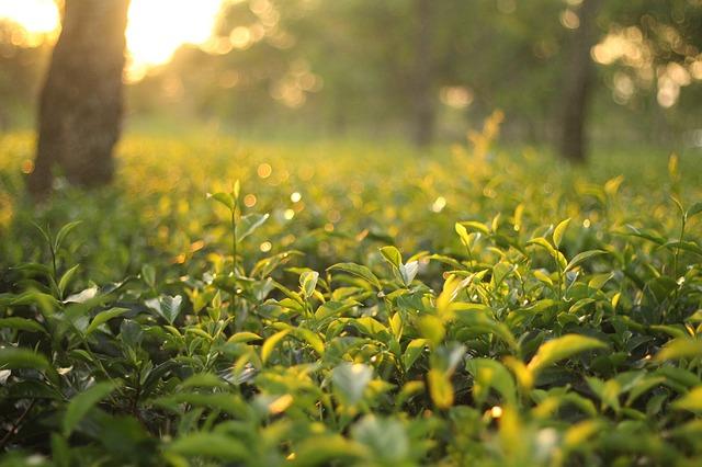 Pięć sposobów na ekonomiczne nawadnianie ogrodu
